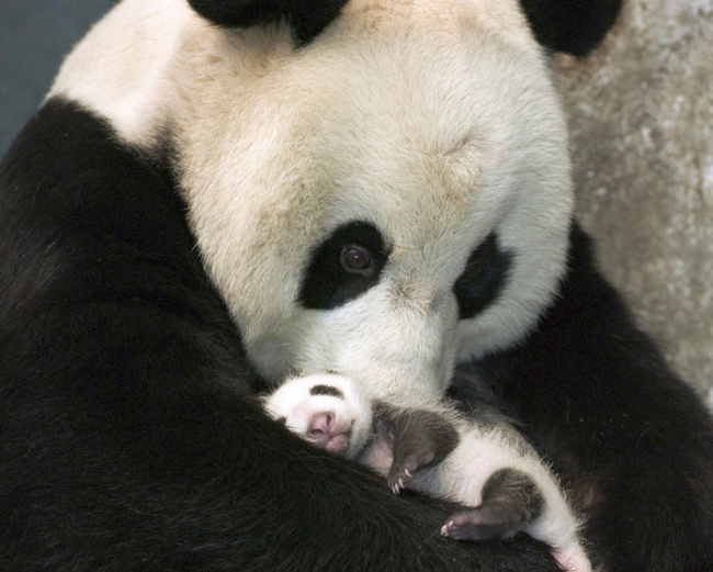 15Baby Animals That Will Melt Even the Coldest Heart - Εικόνα 4