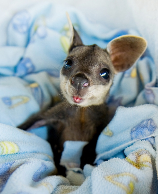 15Baby Animals That Will Melt Even the Coldest Heart - Εικόνα 6
