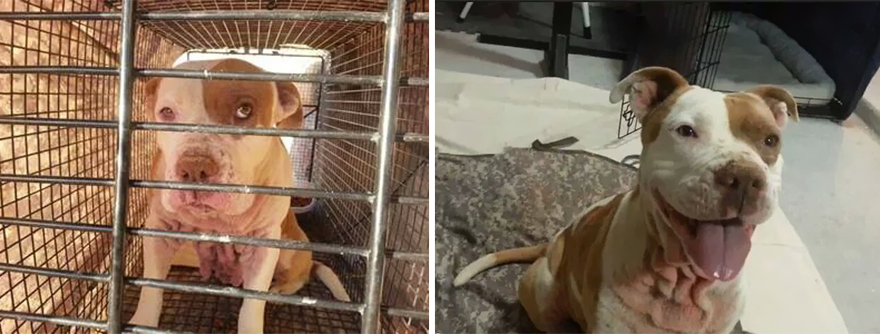 16+ Before & After Pics Show The Difference A Day Of Adoption Can Make To A Shelter Pet - Εικόνα16