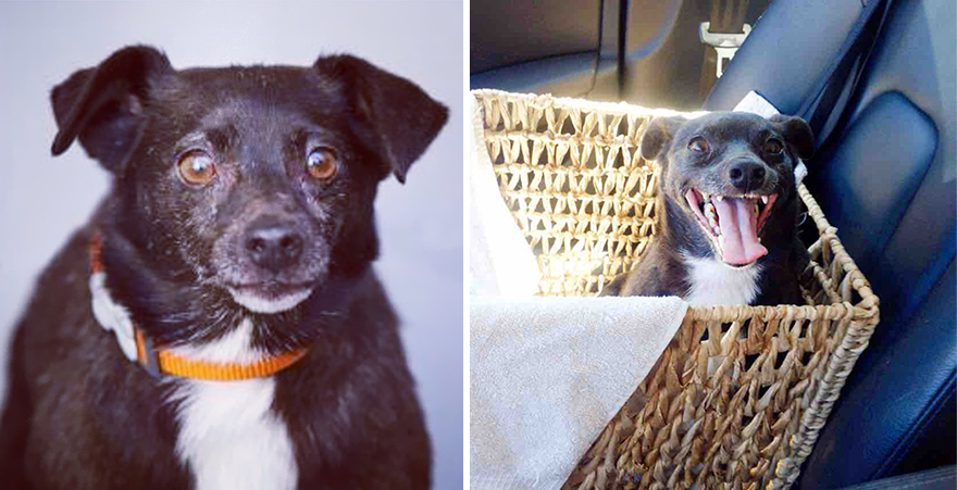 16+ Before & After Pics Show The Difference A Day Of Adoption Can Make To A Shelter Pet - Εικόνα20