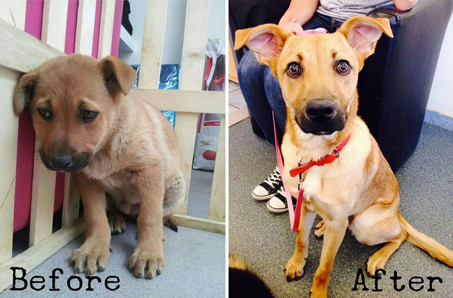 16+ Before & After Pics Show The Difference A Day Of Adoption Can Make To A Shelter Pet - Εικόνα4