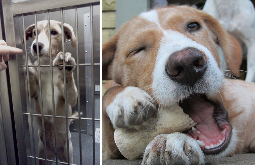 16+ Before & After Pics Show The Difference A Day Of Adoption Can Make To A Shelter Pet - Εικόνα42