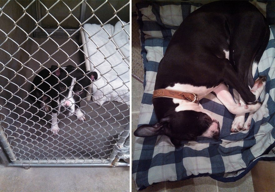 16+ Before & After Pics Show The Difference A Day Of Adoption Can Make To A Shelter Pet - Εικόνα46