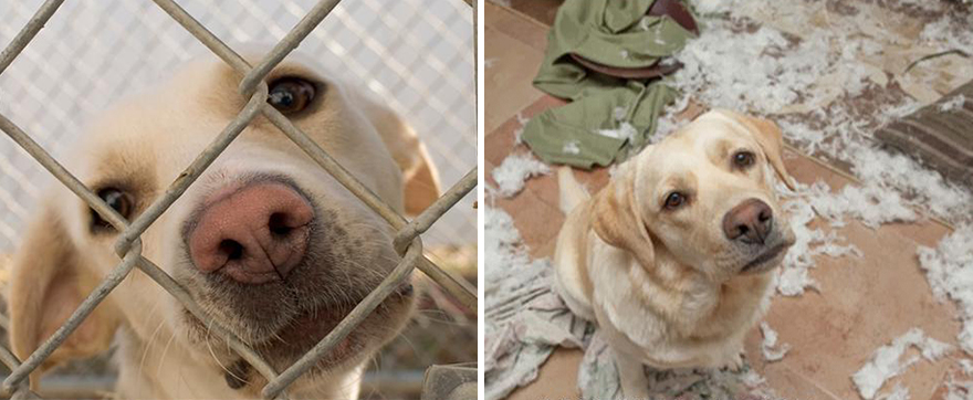 16+ Before & After Pics Show The Difference A Day Of Adoption Can Make To A Shelter Pet - Εικόνα50