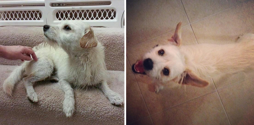 16+ Before & After Pics Show The Difference A Day Of Adoption Can Make To A Shelter Pet - Εικόνα59
