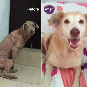 16+ Before & After Pics Show The Difference A Day Of Adoption Can Make To A Shelter Pet - Εικόνα70