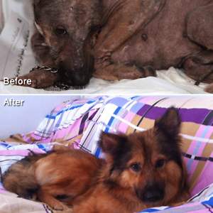 16+ Before & After Pics Show The Difference A Day Of Adoption Can Make To A Shelter Pet - Εικόνα74