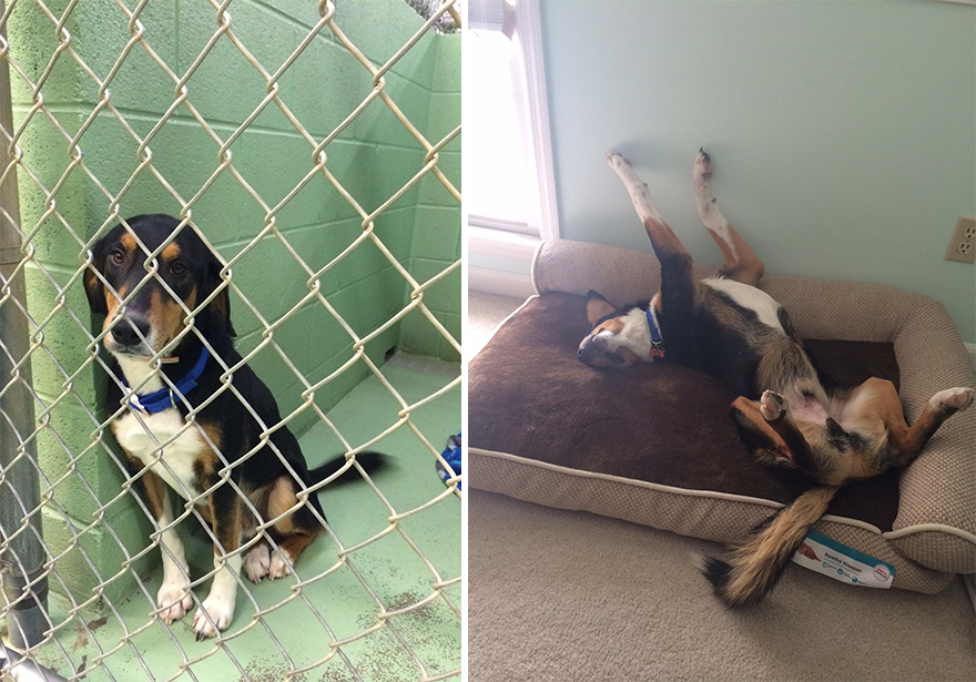 16+ Before & After Pics Show The Difference A Day Of Adoption Can Make To A Shelter Pet - Εικόνα8
