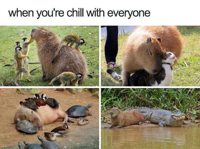 10+ Of The Happiest Animal Memes To Start The Week With A Smile - Εικόνα 19