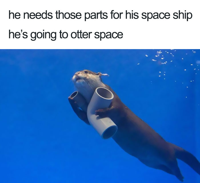 10+ Of The Happiest Animal Memes To Start The Week With A Smile - Εικόνα 25