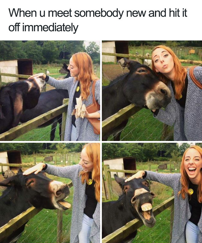 10+ Of The Happiest Animal Memes To Start The Week With A Smile - Εικόνα 28