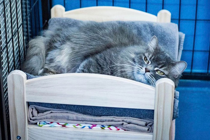 IKEA Donates Doll Beds For Shelter Cats, And It's Just Too Adorable - Εικόνα 1