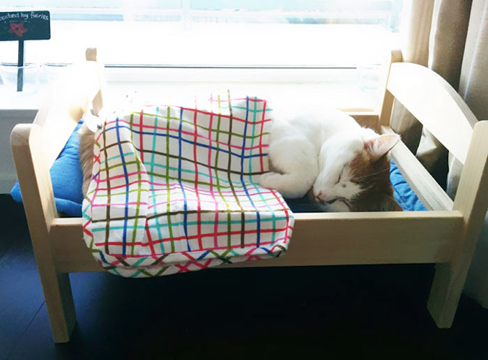 IKEA Donates Doll Beds For Shelter Cats, And It's Just Too Adorable - Εικόνα 3