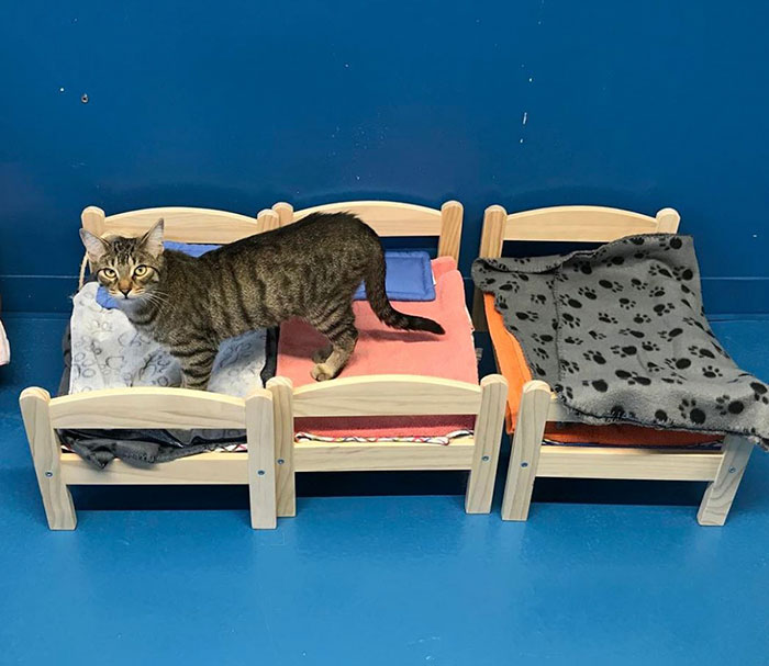IKEA Donates Doll Beds For Shelter Cats, And It's Just Too Adorable - Εικόνα 4