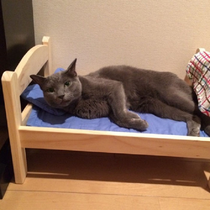 IKEA Donates Doll Beds For Shelter Cats, And It's Just Too Adorable - Εικόνα 6