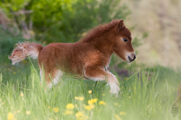 15+ Mini Horses You Don't Want Your Kids To See - Εικόνα11
