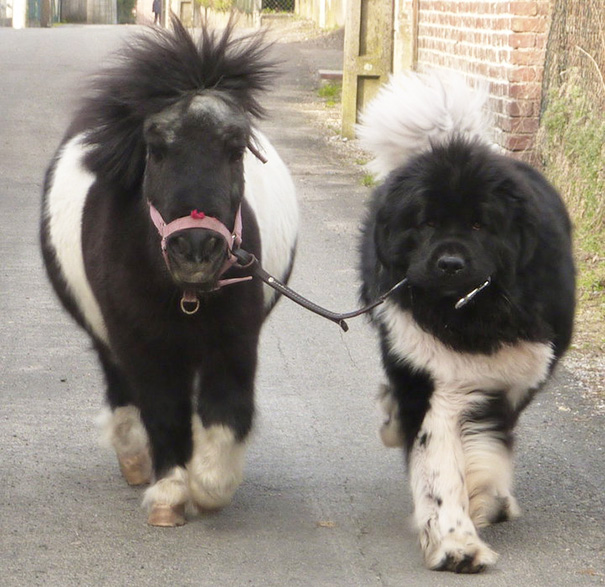 15+ Mini Horses You Don't Want Your Kids To See - Εικόνα18