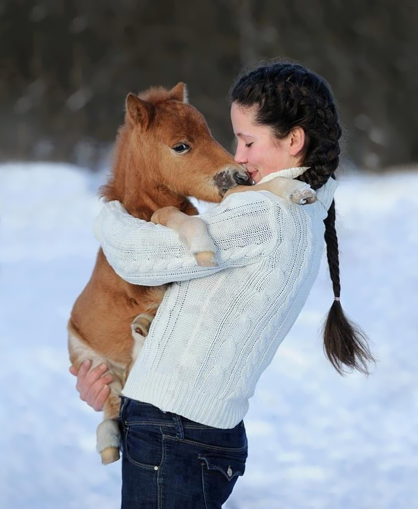 15+ Mini Horses You Don't Want Your Kids To See - Εικόνα22