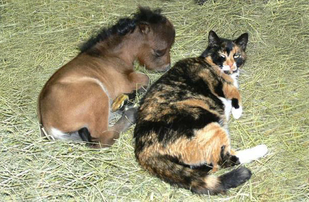 15+ Mini Horses You Don't Want Your Kids To See - Εικόνα37