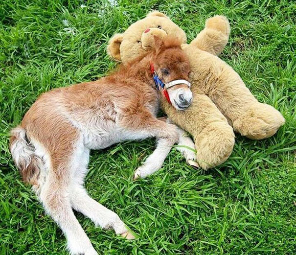 15+ Mini Horses You Don't Want Your Kids To See - Εικόνα42