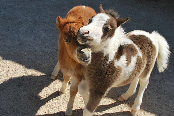 15+ Mini Horses You Don't Want Your Kids To See - Εικόνα46