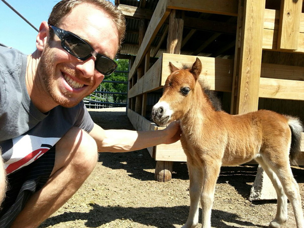 15+ Mini Horses You Don't Want Your Kids To See - Εικόνα50