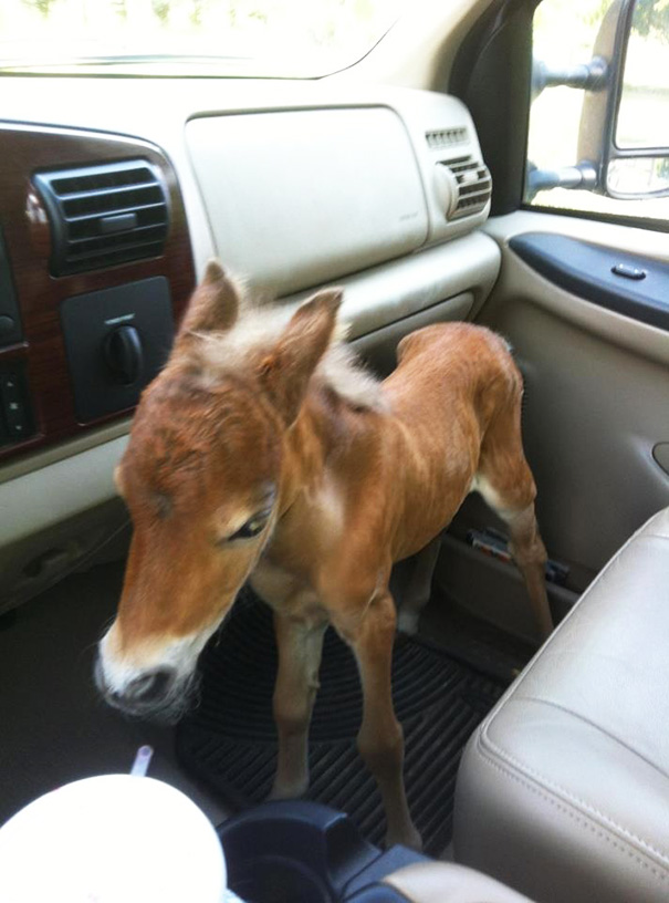 15+ Mini Horses You Don't Want Your Kids To See - Εικόνα54
