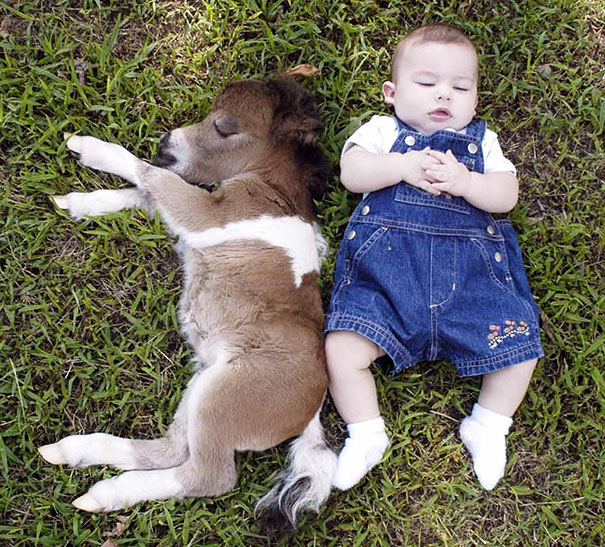 15+ Mini Horses You Don't Want Your Kids To See - Εικόνα6