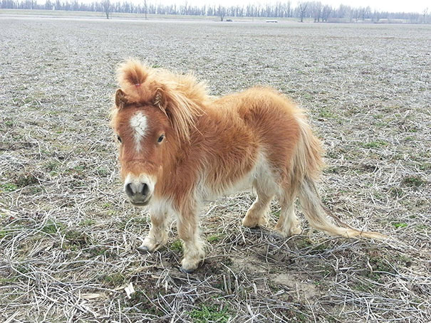 15+ Mini Horses You Don't Want Your Kids To See - Εικόνα63