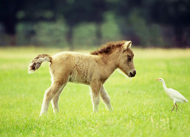 15+ Mini Horses You Don't Want Your Kids To See - Εικόνα67