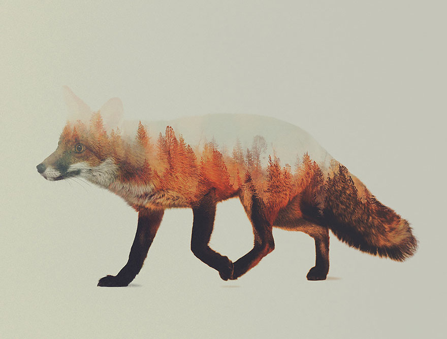 Double-Exposure Animal Portraits By Norwegian Photographer - Εικόνα 1