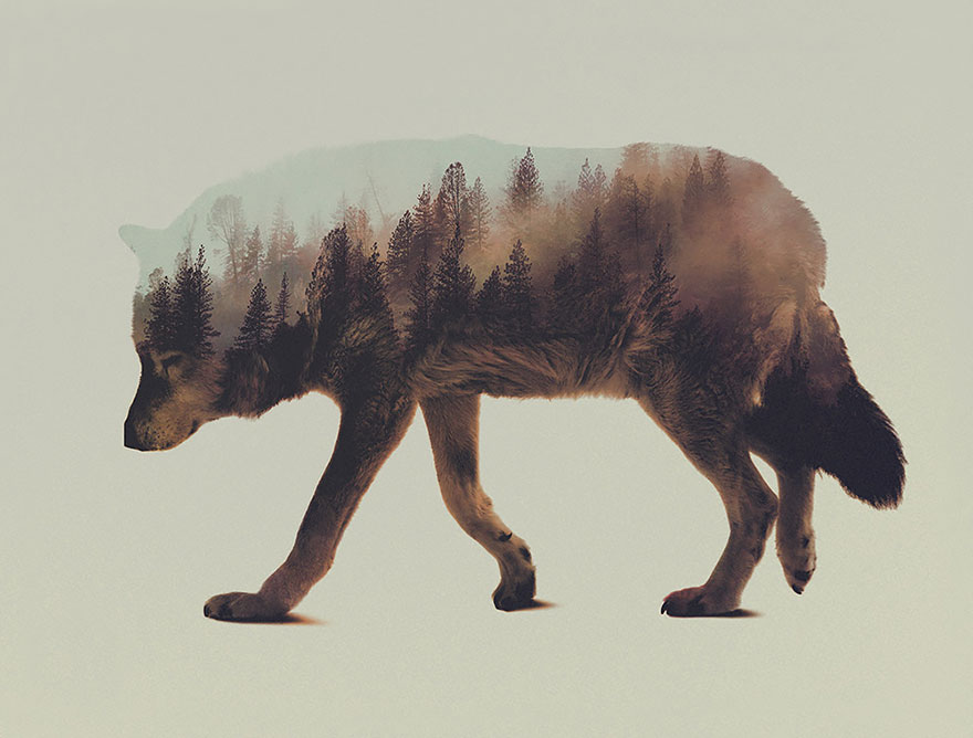 Double-Exposure Animal Portraits By Norwegian Photographer - Εικόνα 2