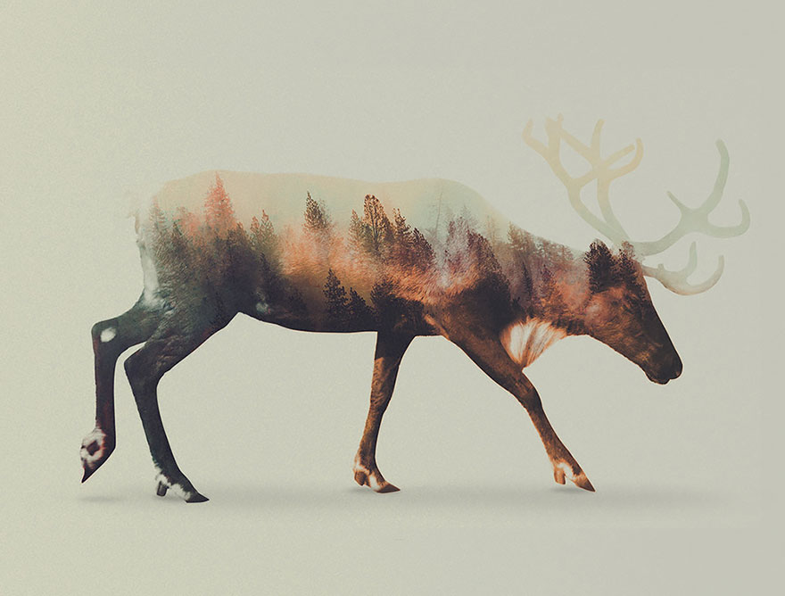 Double-Exposure Animal Portraits By Norwegian Photographer - Εικόνα 3