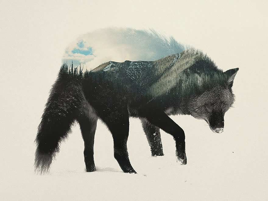 Double-Exposure Animal Portraits By Norwegian Photographer - Εικόνα 4