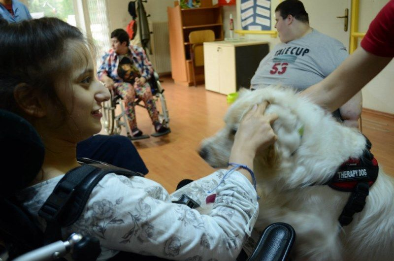 therapydogs04
